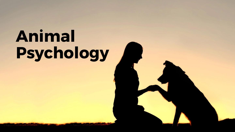 Introduction to Animal Psychology: Pet Behavior - Online