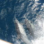 Dolphins 9 28 10    i see you