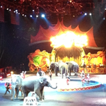 Elephants photo
